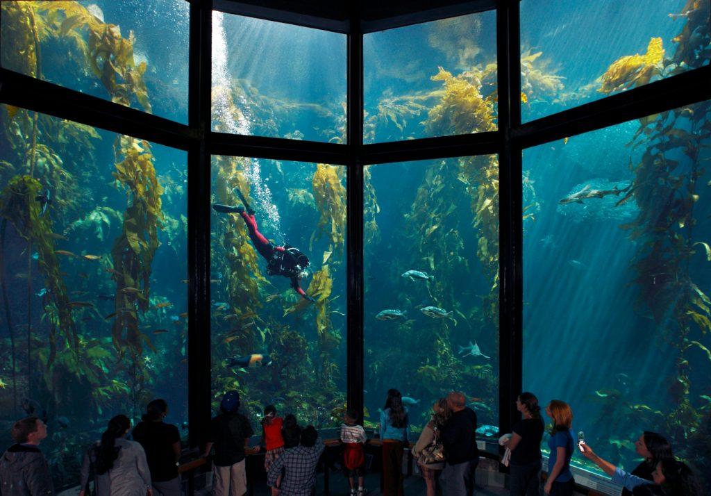 Bay Cam by Monterey Bay Aquarium Beautiful, Amazing - Live ...